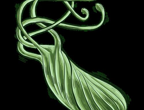 Heliko bakterija (Helicobacter pylori) i sve što treba da znate o njoj