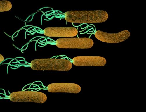 Kako se prenosi Helikobakterija?