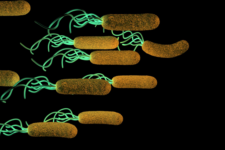 kako se prenosi helikobakterija