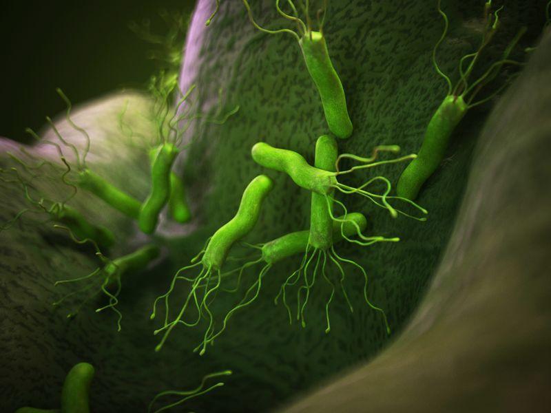 Heliko bakterija prirodni lek